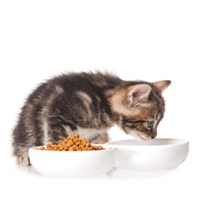 Cat Bowls and Feeders