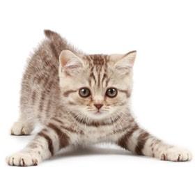 Cat Health & Wellness