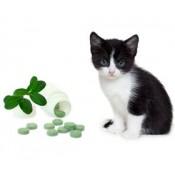 Cat Natural Supplies