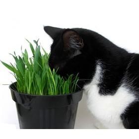 Organic Cat Supplies