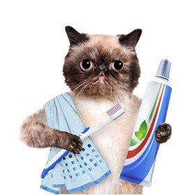 Cat Dental Care