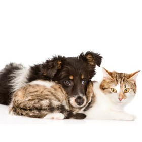 Pets Natural Products